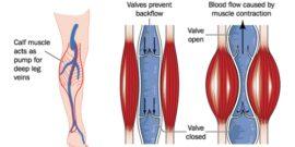 muscle pump blood